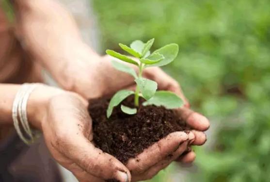 healthy bio-organic fertilizer